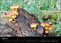 Der Ettersberg - Pilze und Wildpflanzen (Wandkalender 2018 DIN A2 quer) - Produktdetailbild 5