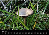 Der Ettersberg - Pilze und Wildpflanzen (Wandkalender 2018 DIN A2 quer) - Produktdetailbild 4