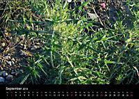 Der Ettersberg - Pilze und Wildpflanzen (Wandkalender 2018 DIN A2 quer) - Produktdetailbild 9