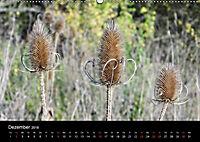Der Ettersberg - Pilze und Wildpflanzen (Wandkalender 2018 DIN A2 quer) - Produktdetailbild 12