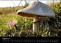 Der Ettersberg - Pilze und Wildpflanzen (Wandkalender 2018 DIN A2 quer) - Produktdetailbild 8