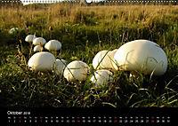 Der Ettersberg - Pilze und Wildpflanzen (Wandkalender 2018 DIN A2 quer) - Produktdetailbild 10