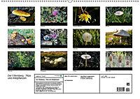 Der Ettersberg - Pilze und Wildpflanzen (Wandkalender 2018 DIN A2 quer) - Produktdetailbild 13