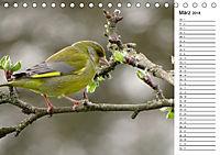 Der frühe Vogel ... erinnert Dich (Tischkalender 2018 DIN A5 quer) - Produktdetailbild 3