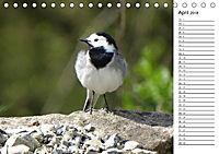Der frühe Vogel ... erinnert Dich (Tischkalender 2018 DIN A5 quer) - Produktdetailbild 4