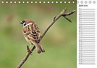 Der frühe Vogel ... erinnert Dich (Tischkalender 2018 DIN A5 quer) - Produktdetailbild 6