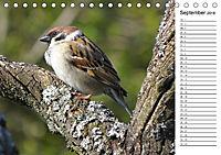 Der frühe Vogel ... erinnert Dich (Tischkalender 2018 DIN A5 quer) - Produktdetailbild 9