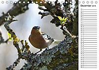 Der frühe Vogel ... erinnert Dich (Tischkalender 2018 DIN A5 quer) - Produktdetailbild 12