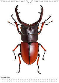 Die schönsten Käfer (Wandkalender 2018 DIN A4 hoch) - Produktdetailbild 3