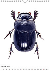 Die schönsten Käfer (Wandkalender 2018 DIN A4 hoch) - Produktdetailbild 1