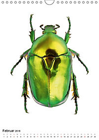 Die schönsten Käfer (Wandkalender 2018 DIN A4 hoch) - Produktdetailbild 2