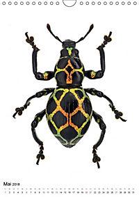 Die schönsten Käfer (Wandkalender 2018 DIN A4 hoch) - Produktdetailbild 5