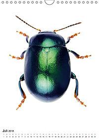 Die schönsten Käfer (Wandkalender 2018 DIN A4 hoch) - Produktdetailbild 7