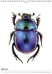 Die schönsten Käfer (Wandkalender 2018 DIN A4 hoch) - Produktdetailbild 4