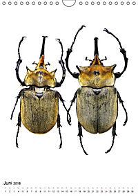 Die schönsten Käfer (Wandkalender 2018 DIN A4 hoch) - Produktdetailbild 6
