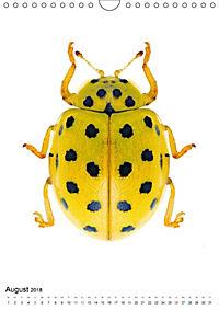 Die schönsten Käfer (Wandkalender 2018 DIN A4 hoch) - Produktdetailbild 8