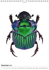 Die schönsten Käfer (Wandkalender 2018 DIN A4 hoch) - Produktdetailbild 12