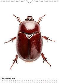 Die schönsten Käfer (Wandkalender 2018 DIN A4 hoch) - Produktdetailbild 9