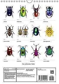 Die schönsten Käfer (Wandkalender 2018 DIN A4 hoch) - Produktdetailbild 13