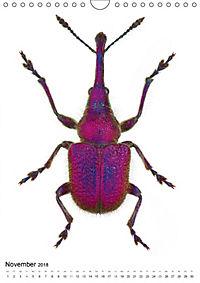 Die schönsten Käfer (Wandkalender 2018 DIN A4 hoch) - Produktdetailbild 11