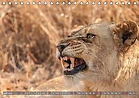 Die Welt der Löwen (Tischkalender 2018 DIN A5 quer) - Produktdetailbild 7