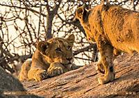 Die Welt der Löwen (Tischkalender 2018 DIN A5 quer) - Produktdetailbild 1