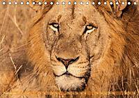 Die Welt der Löwen (Tischkalender 2018 DIN A5 quer) - Produktdetailbild 2
