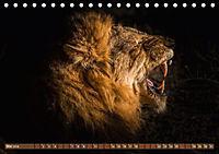 Die Welt der Löwen (Tischkalender 2018 DIN A5 quer) - Produktdetailbild 5