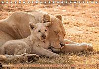 Die Welt der Löwen (Tischkalender 2018 DIN A5 quer) - Produktdetailbild 12