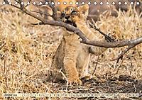 Die Welt der Löwen (Tischkalender 2018 DIN A5 quer) - Produktdetailbild 10