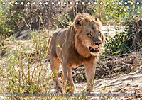 Die Welt der Löwen (Tischkalender 2018 DIN A5 quer) - Produktdetailbild 8