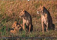 Die Welt der Löwen (Wandkalender 2018 DIN A2 quer) - Produktdetailbild 9
