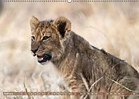 Die Welt der Löwen (Wandkalender 2018 DIN A2 quer) - Produktdetailbild 4