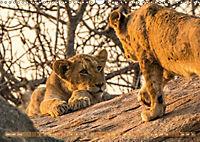 Die Welt der Löwen (Wandkalender 2018 DIN A3 quer) - Produktdetailbild 1