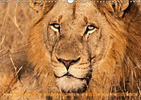 Die Welt der Löwen (Wandkalender 2018 DIN A3 quer) - Produktdetailbild 2
