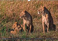 Die Welt der Löwen (Wandkalender 2018 DIN A3 quer) - Produktdetailbild 9