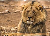 Die Welt der Löwen (Wandkalender 2018 DIN A3 quer) - Produktdetailbild 11