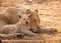 Die Welt der Löwen (Wandkalender 2018 DIN A3 quer) - Produktdetailbild 12