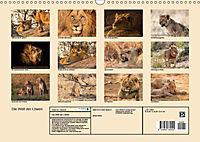 Die Welt der Löwen (Wandkalender 2018 DIN A3 quer) - Produktdetailbild 13