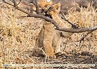 Die Welt der Löwen (Wandkalender 2018 DIN A3 quer) - Produktdetailbild 10