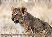 Die Welt der Löwen (Wandkalender 2018 DIN A4 quer) - Produktdetailbild 4