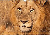 Die Welt der Löwen (Wandkalender 2018 DIN A4 quer) - Produktdetailbild 2