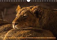 Die Welt der Löwen (Wandkalender 2018 DIN A4 quer) - Produktdetailbild 3
