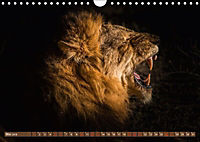 Die Welt der Löwen (Wandkalender 2018 DIN A4 quer) - Produktdetailbild 5