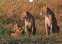 Die Welt der Löwen (Wandkalender 2018 DIN A4 quer) - Produktdetailbild 9