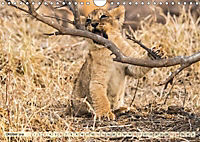 Die Welt der Löwen (Wandkalender 2018 DIN A4 quer) - Produktdetailbild 10