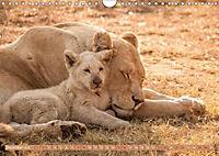 Die Welt der Löwen (Wandkalender 2018 DIN A4 quer) - Produktdetailbild 12