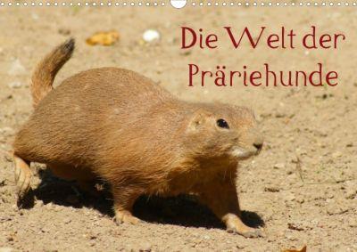 Die Welt der Präriehunde (Posterbuch, DIN A3 quer), Kattobello