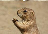 Die Welt der Präriehunde (Posterbuch, DIN A3 quer) - Produktdetailbild 12
