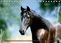 Edle spanische Pferde - Pura Raza Espanola (Tischkalender 2018 DIN A5 quer) - Produktdetailbild 1